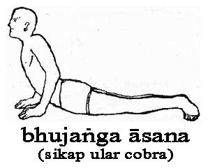 Bhujanga asana (Sikap kobra)