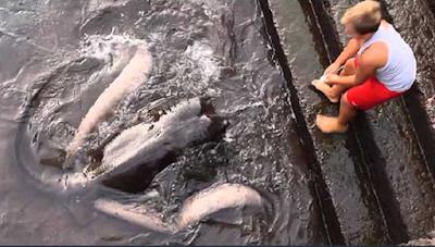 Lihat Apa yang Dilakukan Anak Kecil Di Pinggir Air! Kamu Tidak Akan Percaya