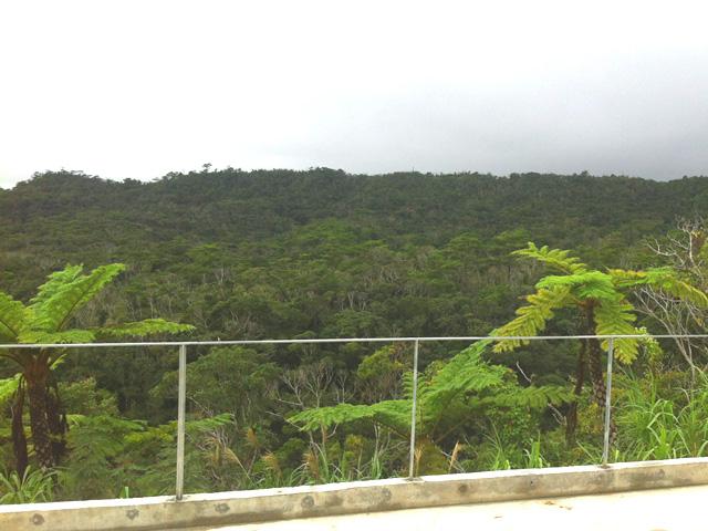 バルコニーから見た景色
