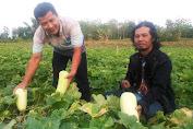 Anggota PPWI Rembang, Rustamaji Sukses Kembangkan Bisnis Mentimun Jepang