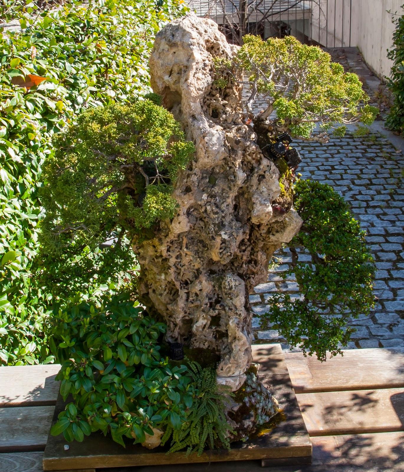 Orea bonsai colecci n de bons is del real jard n bot nico - Jardin de bonsais ...