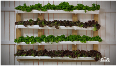 Vertical Garden: Possible Ideas to Beautify Free Space
