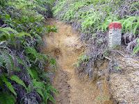 包ヶ浦自然歩道から弥山登山