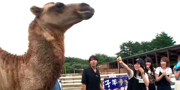 http://46-news.blogspot.com/2016/09/1-day-in-nasu-animal-kingdom-idiot.html