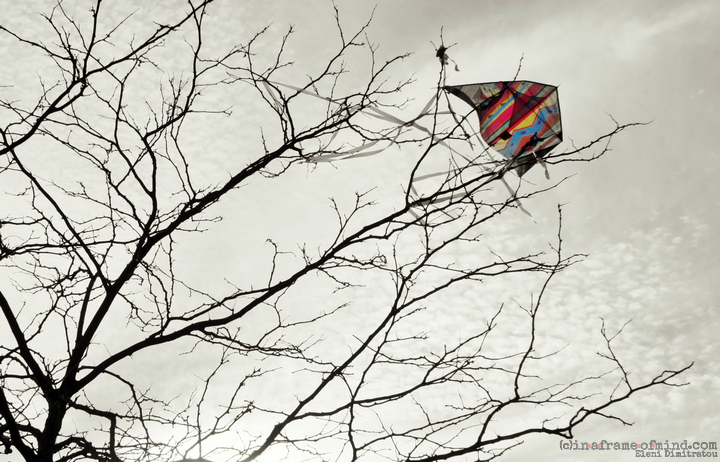 kite caught on tree