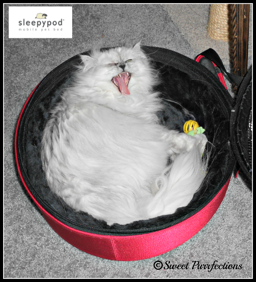 Truffle shouting in her Sleepypod®