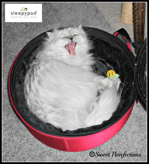 Truffle shouting in her Sleepypod®