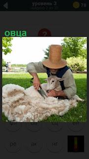 мужчина занимается стрижкой овцы на поляне