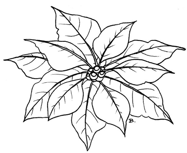 poinsetta coloring pages - photo#14