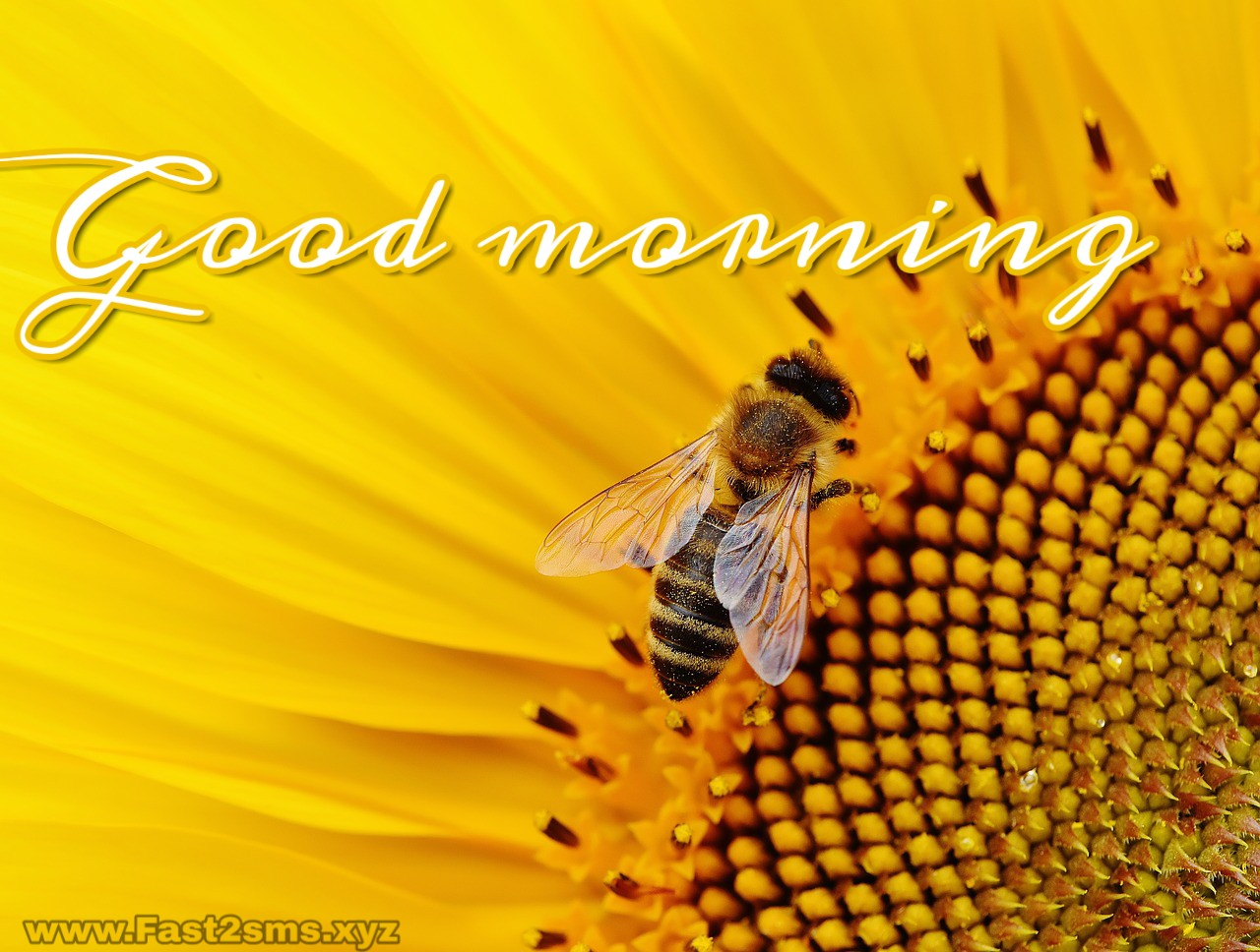 Good Morning Images Hd Good Morning Images Free Download By Fast2sms