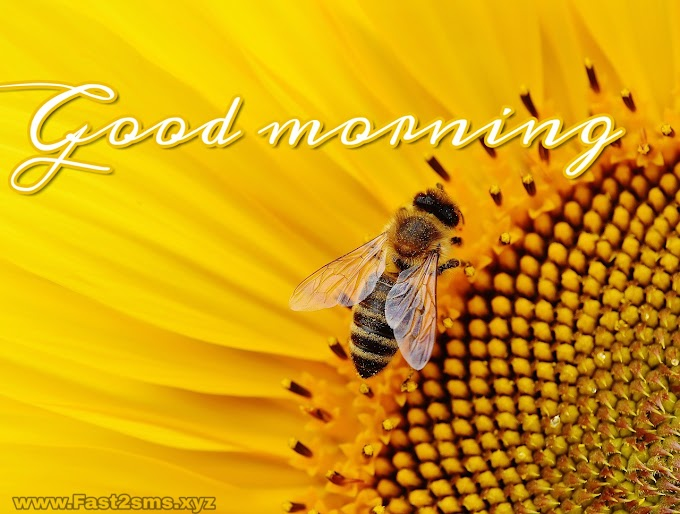 Good Morning Images HD | Good Morning Images Free Download By Fast2sms