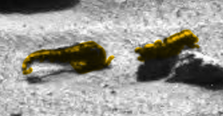 UFO SIGHTINGS DAILY: Two Animals Found On Mars Surface In ...