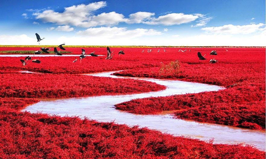 13. Red Beach in Panjin, China - 29 Unbelievable Locations That Look Like They're Located On Another Planet