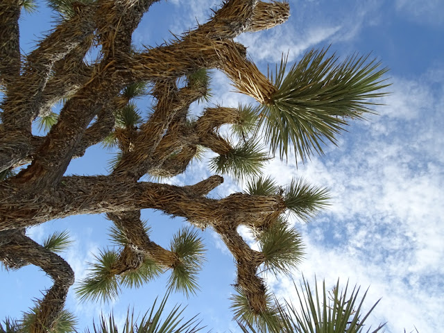 summervibecalifornieroadtripcaliforniausajoshuatree
