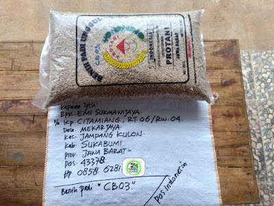 Benih Padi Pesanan    EMI SUKMAWIJAYA Sukabumi, Jabar.    Benih Sebelum di Packing.