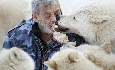 6fa38737cf Για περισσότερα από 40 χρόνια ο Βέρνερ Φρόιντ ζει μαζί με αγέλες λύκων