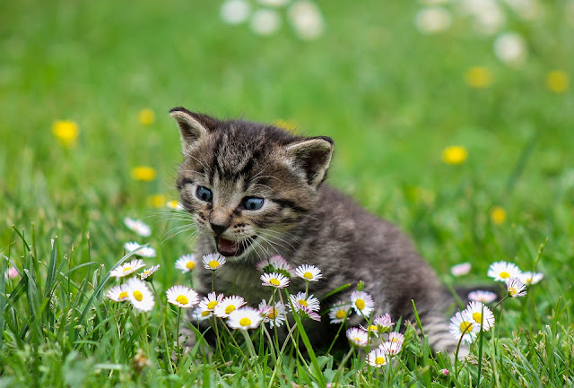 7 Things That Make Cats The Best Pets