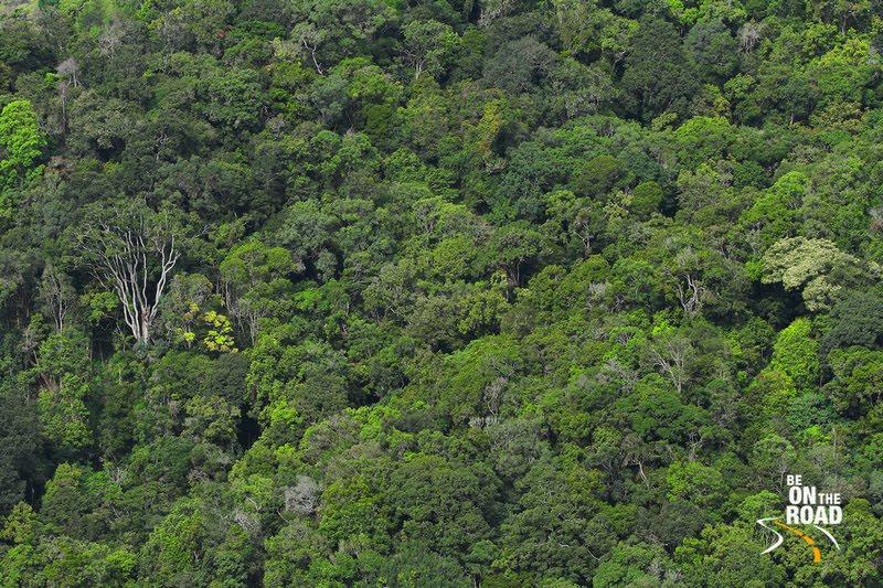 The dense shola forests of Yellapatty, Kerala