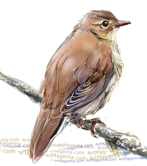 River warbler sketch painting. Bird art drawing by illustrator Artmagenta