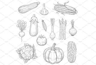 Tutorial dan Cara Membuat Sketsa Sayuran Untuk Pemula dan Anak Kecil