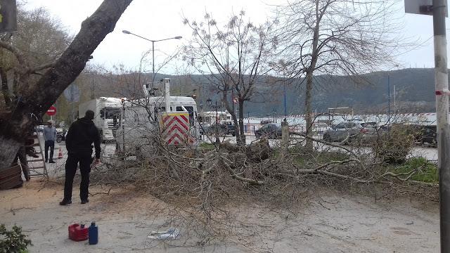 Ηγουμενίτσα: Έκλεισε ο δρόμος στα Πλατάνια, από πτώση πλάτανου (ΦΩΤΟ+ΒΙΝΤΕΟ)