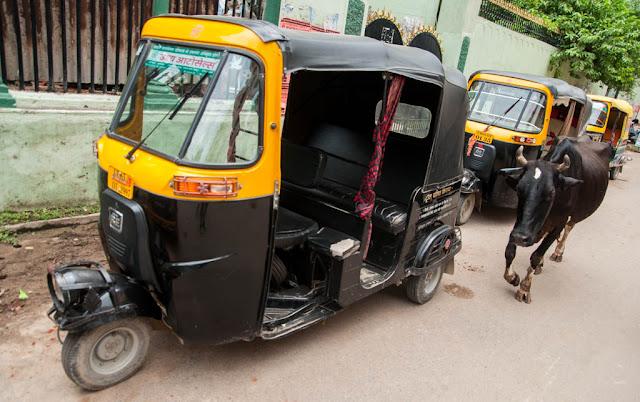 El taxi y la vaca, iconos de la India