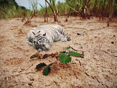 Gambar: Hasil Edit (Harimau dan Putri Malu)