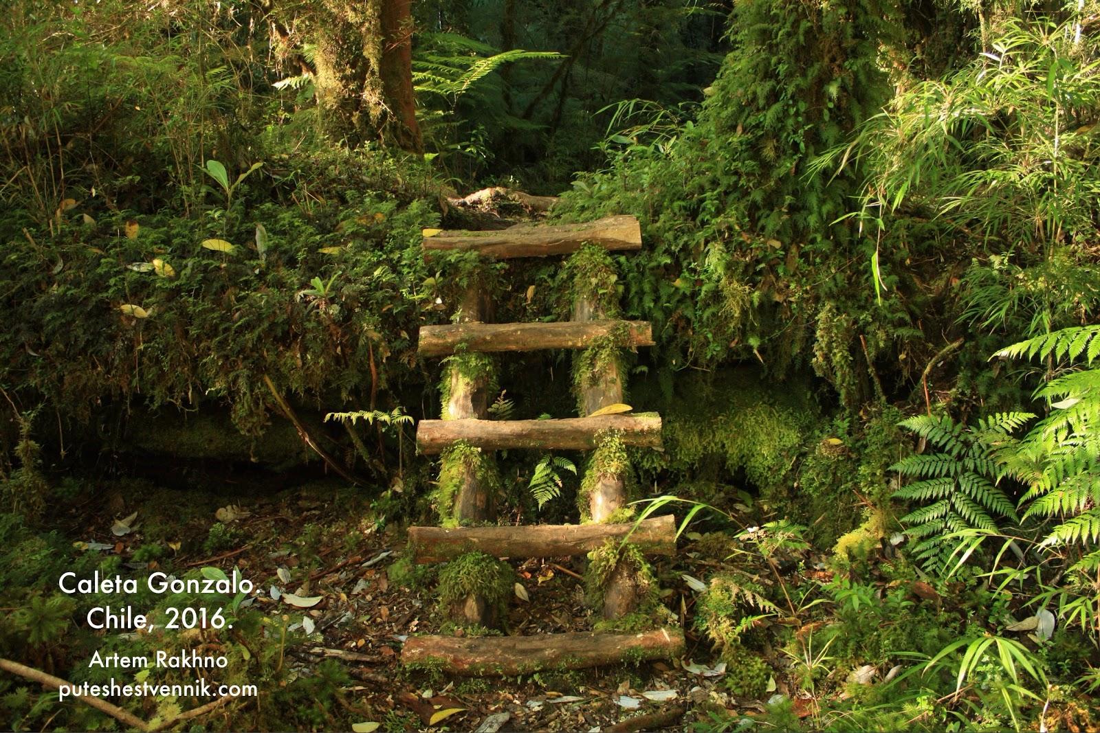 Деревянная лестница на тропе