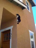 Gatos que terminaron en lugares complicados