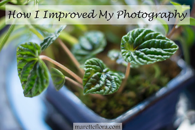 How I Improved My Photography