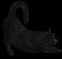 gato preto espreguiçando