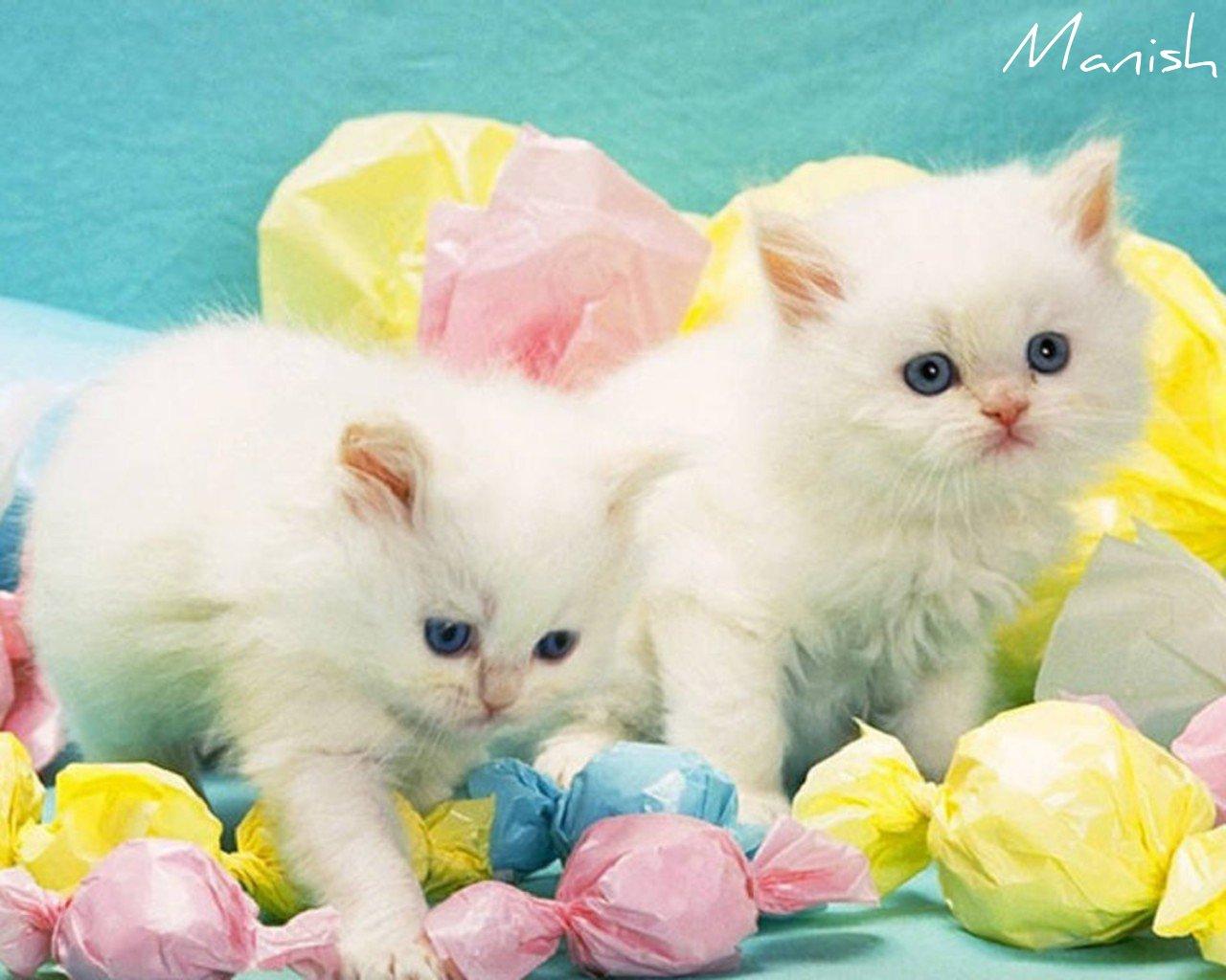Kittens wallpaper kitten wallpaper - Cute kittens hd images ...