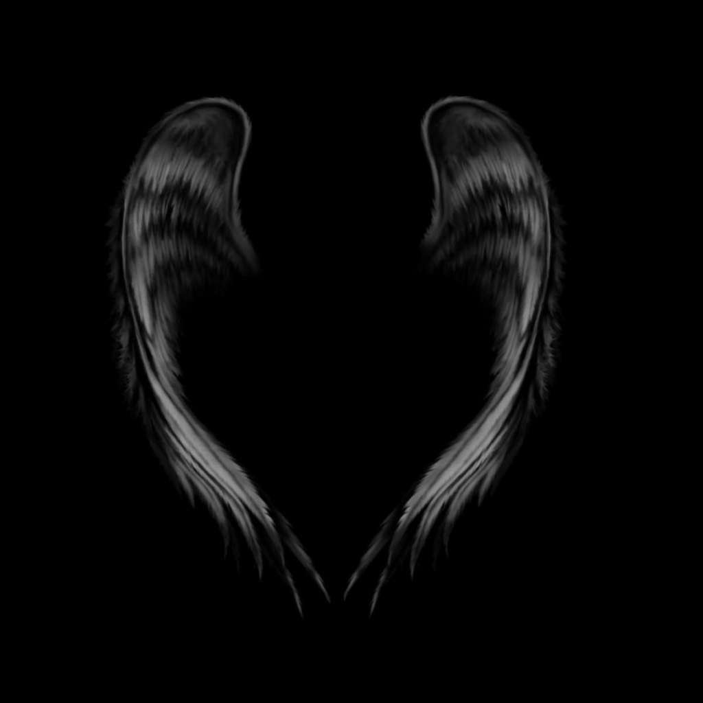 angel wings black background -#main