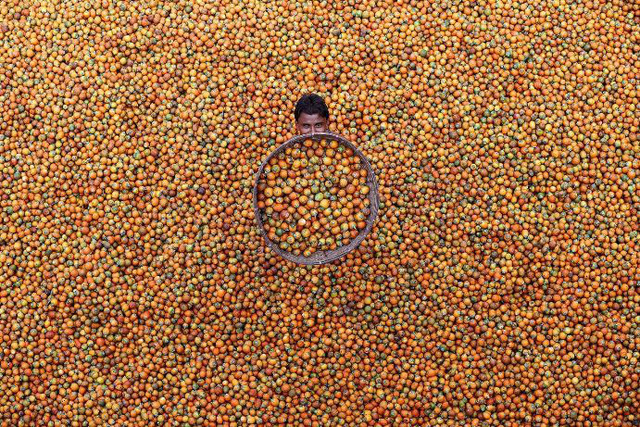 """Quả cau"" của M. Yousuf Tushar/ Coxbazar, Banglades"