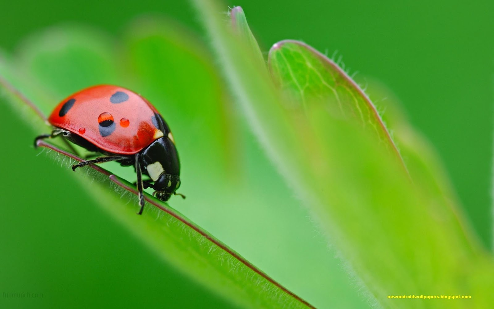 Best Collection Of 2014 Insects Wallpapers In Super Hd For ...