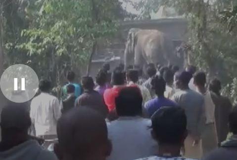 Bihar की Supaul district में एक Elephant ने ली तीन लोगो की Jaan | Video हुआ viral