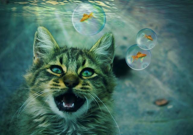 Macja në ëndërr, Macja ne enderr komentimi, Maqoku ne enderr komentimi, shpjegimi