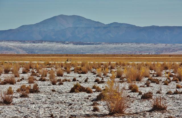 O entorno da Laguna Céjar, no Deserto do Atacama.