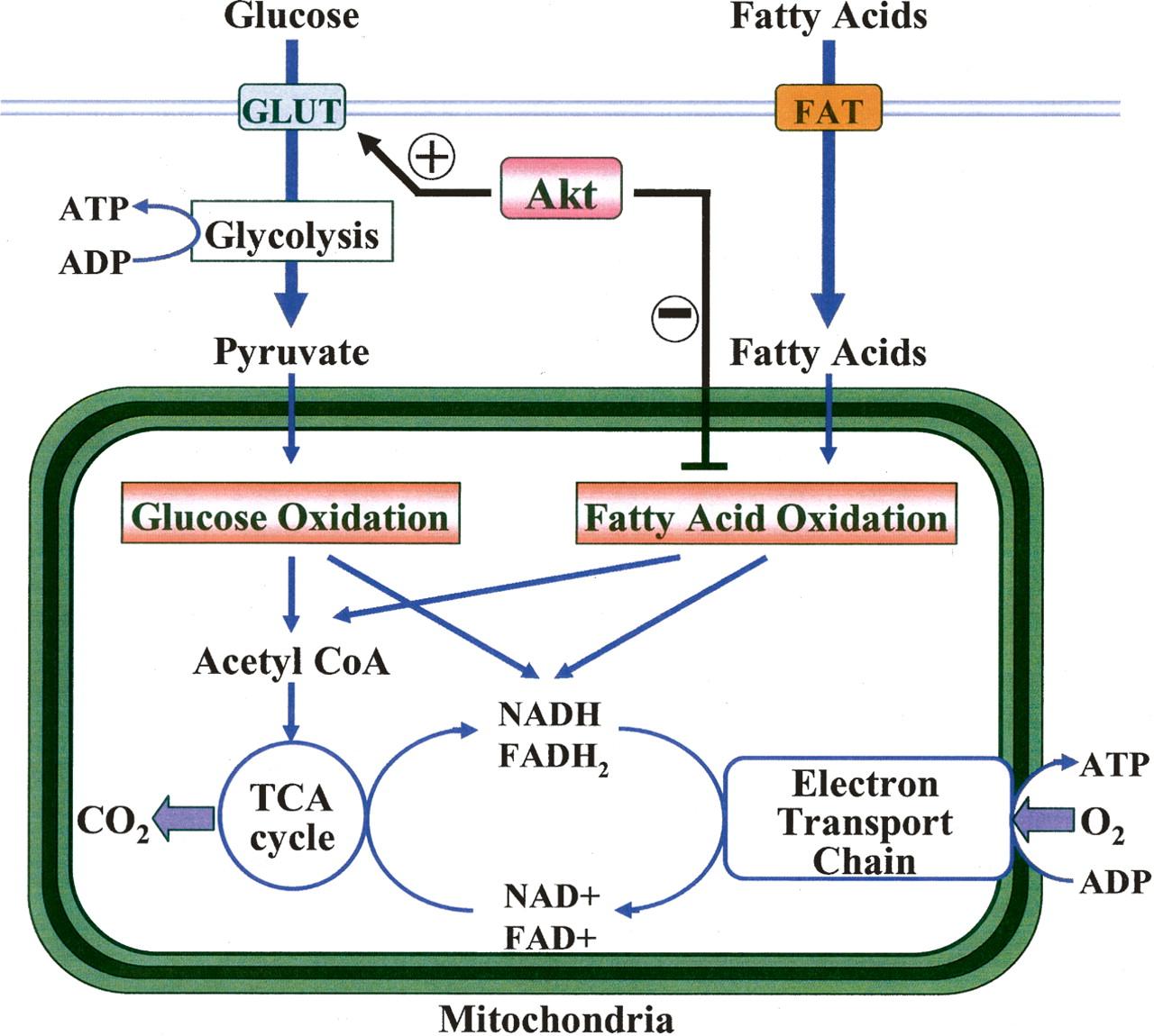 Bio Geo Nerd Metabolic Pathways