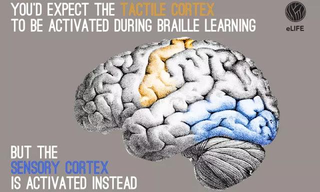 Menghilangkan Hambatan Di Otak Dengan Pembelajaran Kompleks