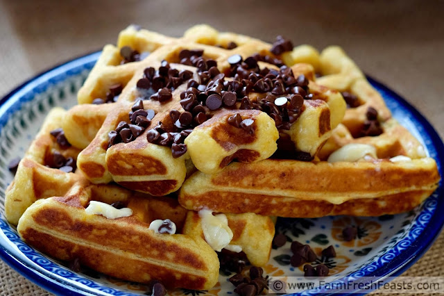 Tender pumpkin waffles made with pumpkin spice eggnog, with chocolate chips inside and out.
