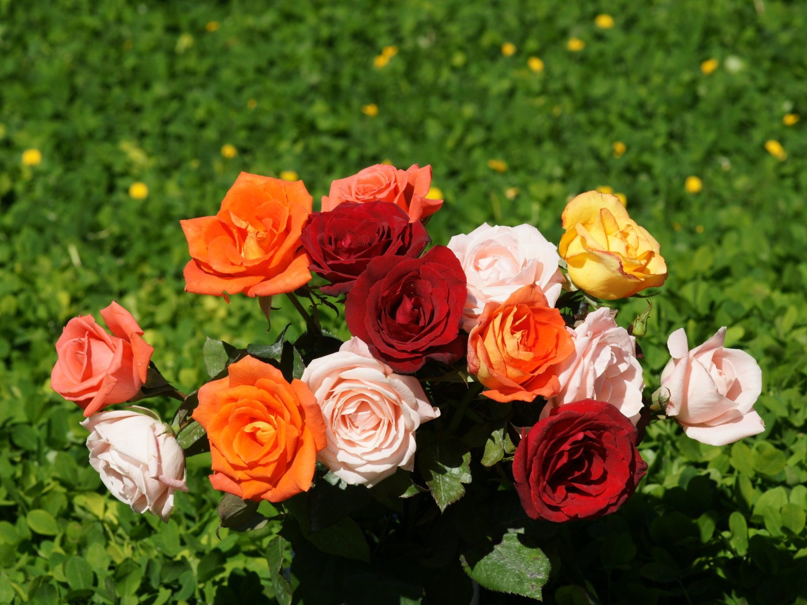 download free high quality flowers wallpapers for android | top