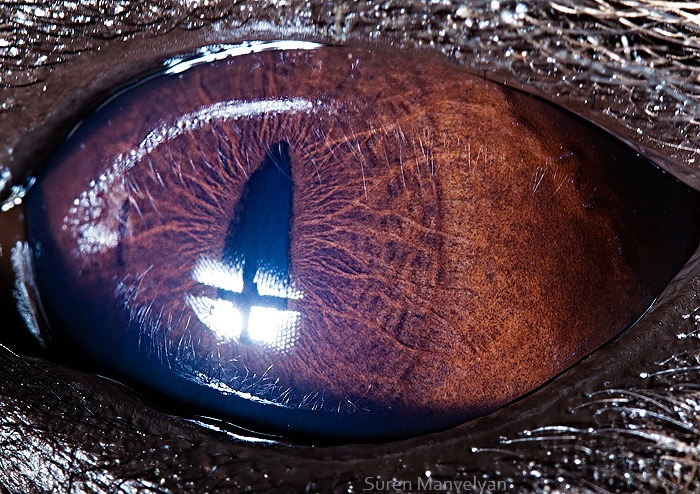 Amazing close-up photos of animal eyes (9 pics) | Amazing ...Animal Eye Close Up