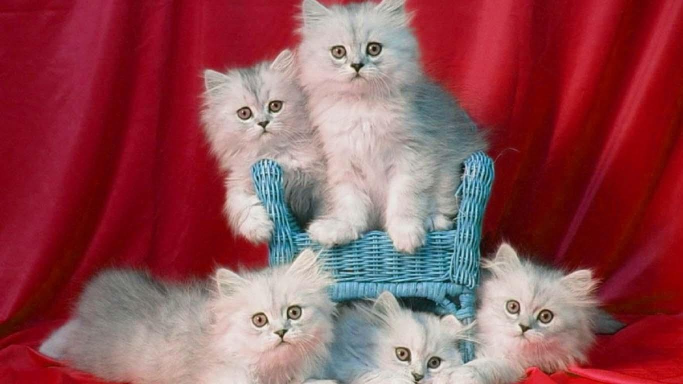 oh-kucing-keluarga-bagus-snape