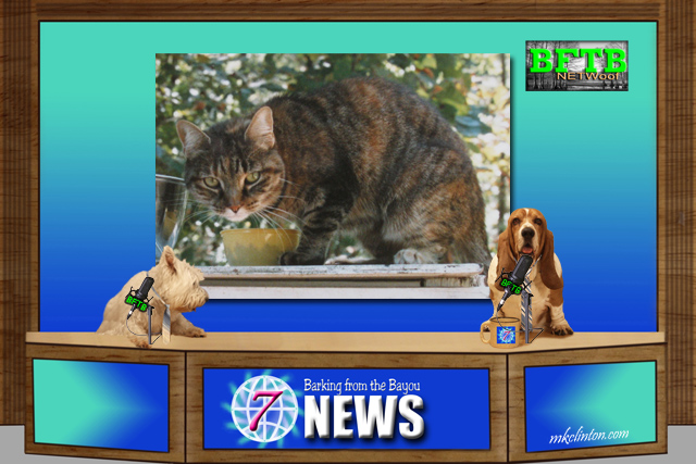 BFTB NETWoof News report on a cat