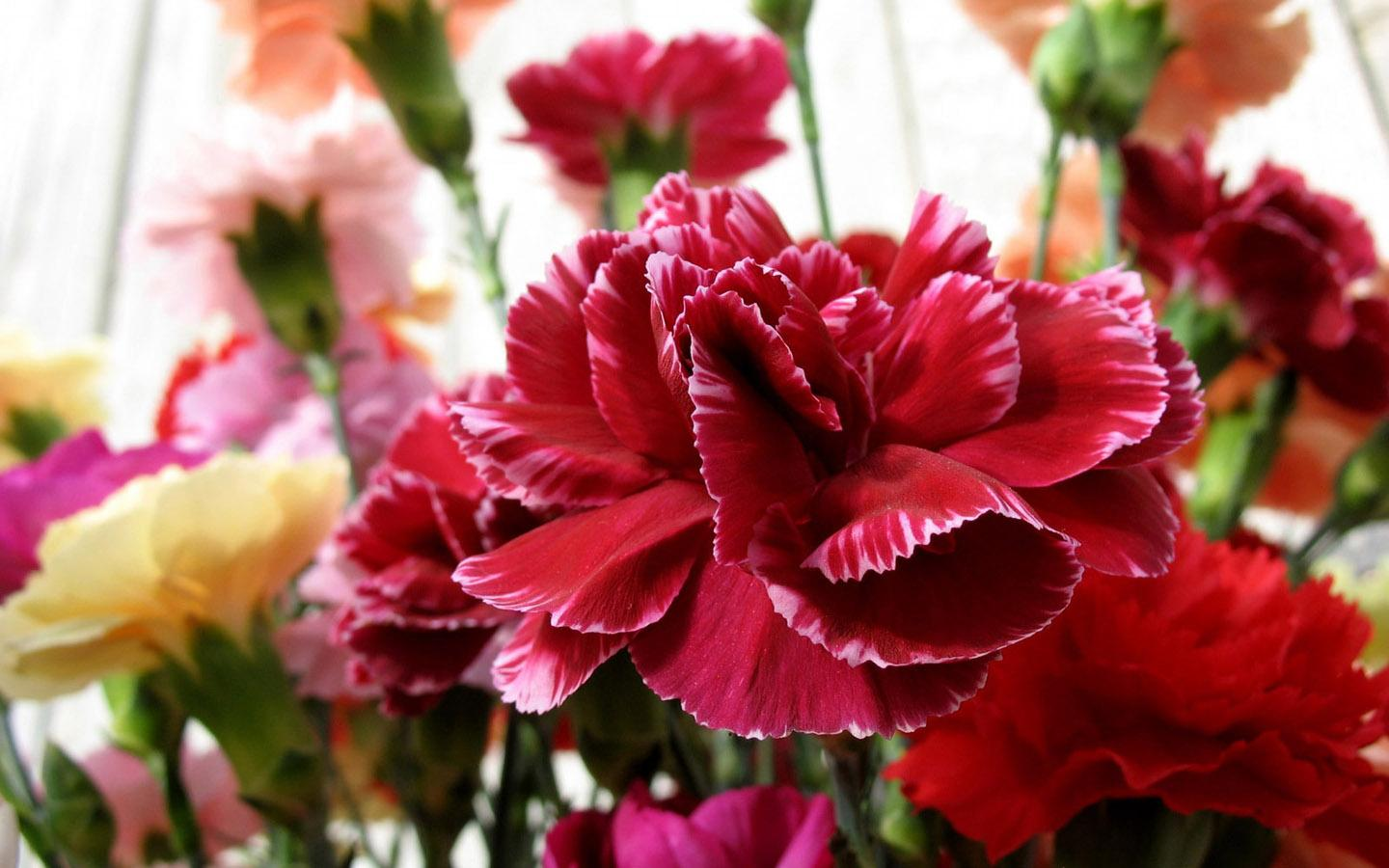 Flower Homes: Carnations Flowers