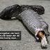 Pemilik paksa ular muntah keluar bangkai kucing peliharaannya