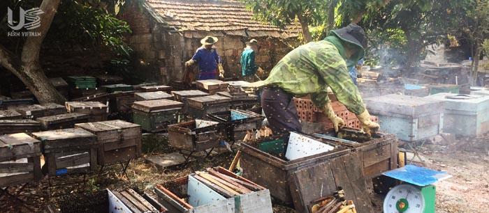 Hệ thống trại ong
