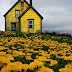 Abandoned Yellow House in Nova Scotia - Nature Photo - 0010