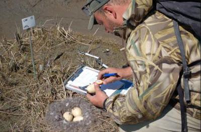 Naturalista realizando trabajo de campo